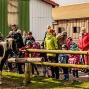 Bauernhof Reiten Nordsee